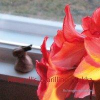 Amaryllis, ritarillinen kukka: Multasormen mietteet