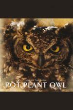 Pot plant owl / Allan and Tracy Eccles